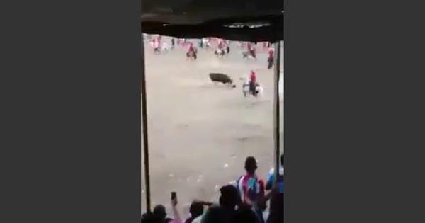 bò tót giết chết người đàn ông
