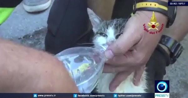 chú mèo được cứu sống trong đống đổ nát ở Ý