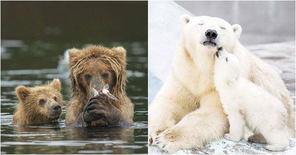 ảnh đẹp về gấu mẹ và gấu con