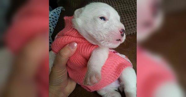 chú chó nhỏ nhắn cute