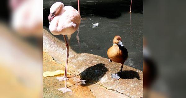 khi vịt muốn trở thành chim hồng hạc