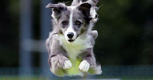 cuộc thi chó ở Slovenia