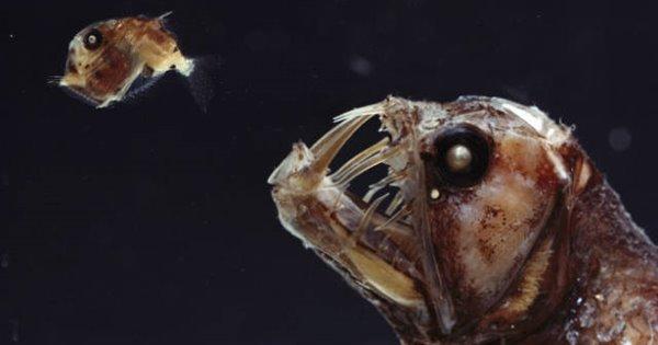 quái vật dưới đại dương