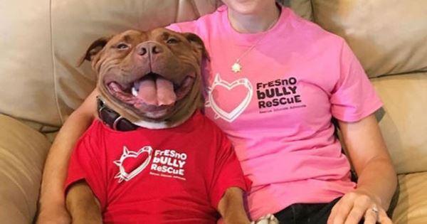 chú chó pit bull không ngừng cười